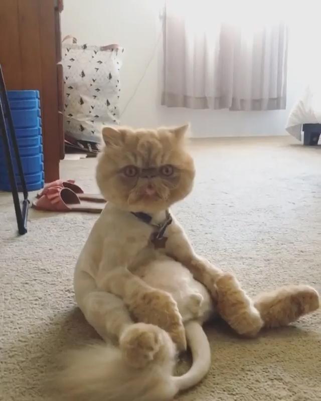 为什么要给猫做绝育?给猫做绝育的好处